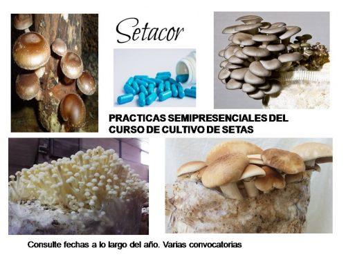 practicas_de_siembra_de-setas_setacor
