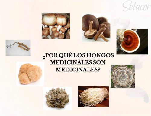 Componentes activos de las setas medicinales