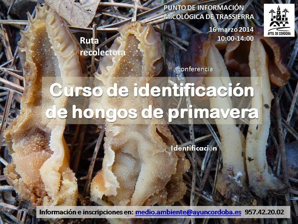 CURSO DE IDENTIFICACIÓN DE HONGOS DE PRIMAVERA