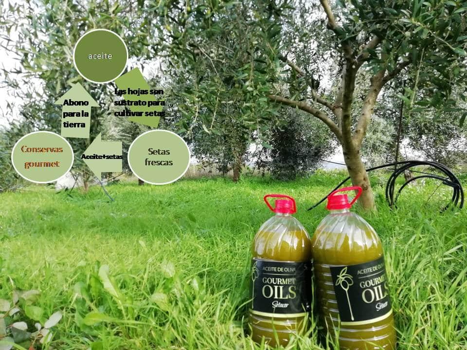 Aceite de oliva cultivado con hongos