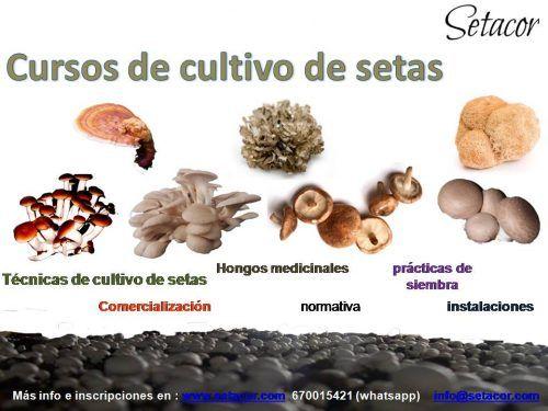 CURSOS DE CULTIVO