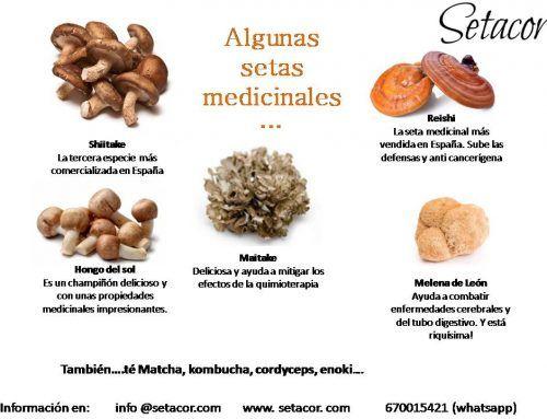 Ventajas de cultivar setas medicinales