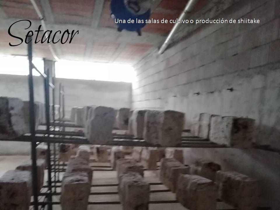 Cooperativa de fungicultores Ad Fauces