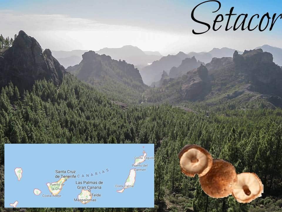 cultivos de setas en Canarias