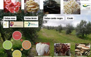 catalogo_setas_setacor