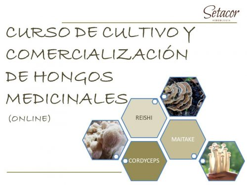 curso_setas_medicinales_setacor